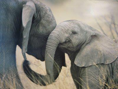 Elephantandmama