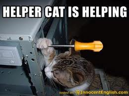 The guy fixing your computer hates you the girly geek helper cat sciox Image collections